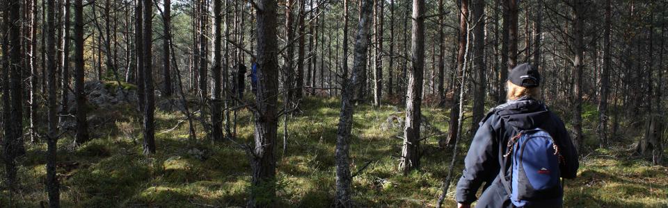 Geologiutflykt till Klipperås
